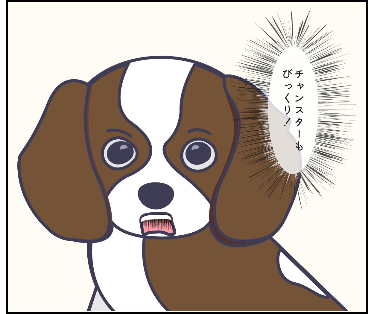 キャバリア 犬 びっくり ショック 男性 顔 表情